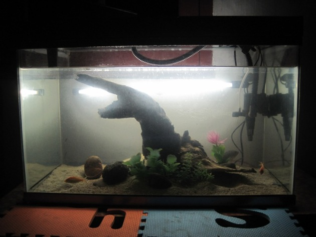 aquascape jadi2an